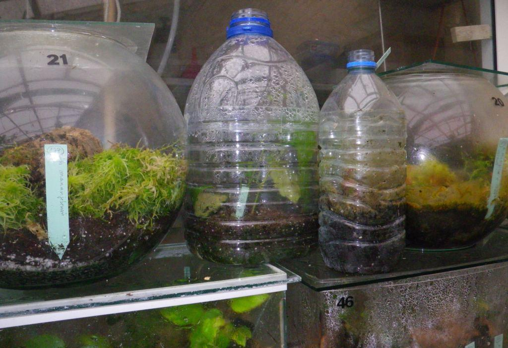 Cultiver des b gonias en terrarium afabego for Aquarium plastique